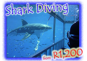 RightBar - WhiteSharkCageDiving