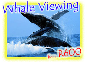 Whale Watching Listing